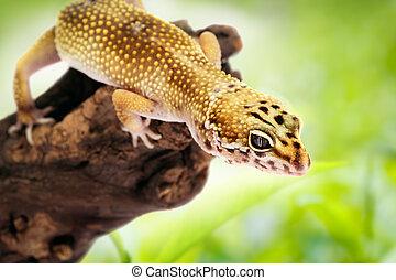 Gecko sitting on a branch
