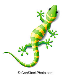Gecko - Vector illustration of a gecko. Image does not ...