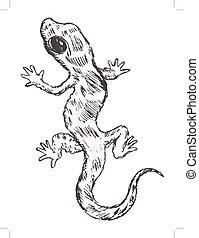 gecko, vue dessus