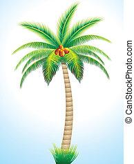 gedetailleerd, palmboom, met, cocosnoot