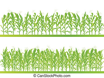 gedetailleerd, platteland, koren, illustratie, akker, vector...