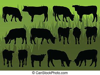 gedetailleerd, vleeskoe, illustratie, silhouettes, vee