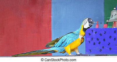 gedresseerd, papegaai