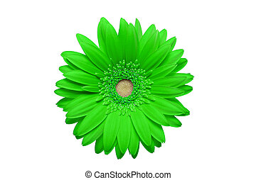 geen daisy isolated on white