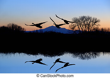 Reflected Riparian Tree and Canadian Geese in Evening Blue