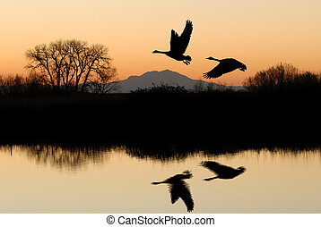 Geese and Riparian Reflection - Reflected Riparian Tree and...
