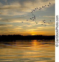 Geese at Sunset on the Lake