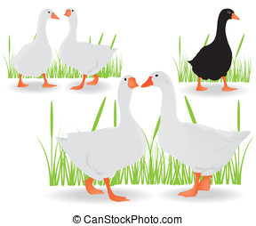 Geese black and white illustration
