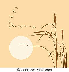 geese, bulrush, vlucht, tekening