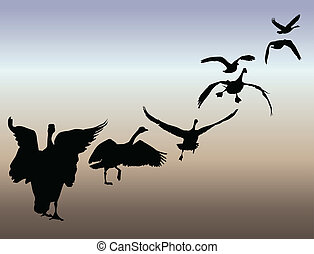 Geese in flight illustration - Series of six geese taking...