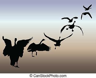 Geese in flight illustration