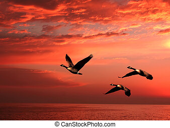 geese flying over the ocean at sunset