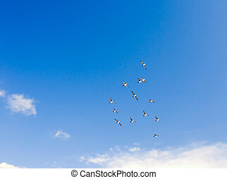 Birds flying Images an...