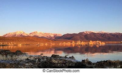 Geese swimming in Mono Lake at Sunrise