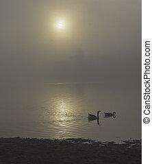 Geese swimming on Lake at sunrise
