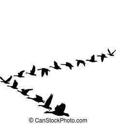 geese, vliegen, in, de, vorm, van, eenheid