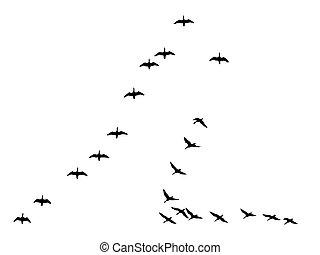 geese, vrijstaand, silhouettes, achtergrond, witte , vlucht