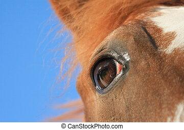 geest, van, een, paarde