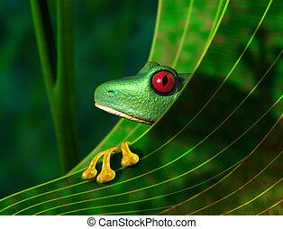 gefährdet, rainforest, grünfrosch
