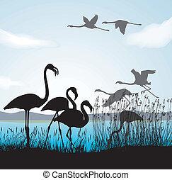 gefüttert, kinder, vögel