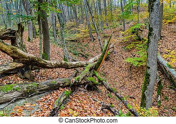 gefallene bäume