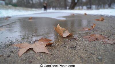 gefrorene pfütze, bedeckt, mit, eis, und, abgefallene...