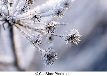 gefrorenes, pflanze