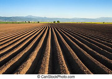 gegen, sowing, kartoffel, fruehjahr, nach, -, früh, feld, rennender , horizont, furchen