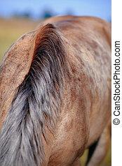gegraasde, horse., manen