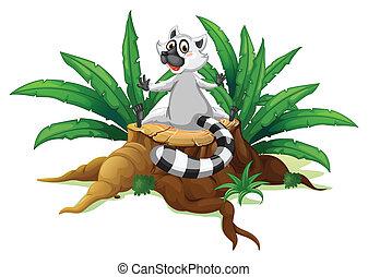 gehakte, lemur, hout, zittende