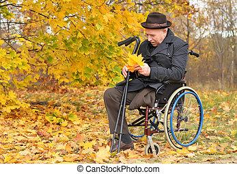 gehandicapte man, in, een, wheelchair, het verzamelen, bladeren