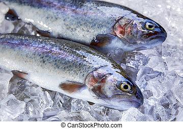 geheel, verse vis, forel, op, ijs