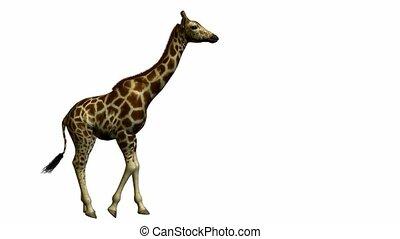 gehen, giraffe