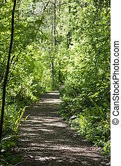 gehen, spur, in, der, wälder