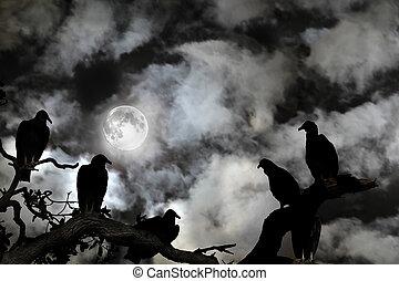 geier, silhouetted, gegen, a, vollmond, und, gespenstisch, himmelsgewölbe