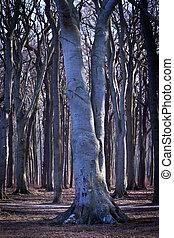 Geisterwald - Nienhagen