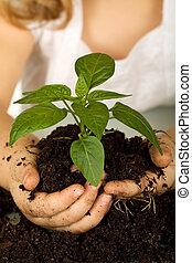 geitje, handen, vasthouden, een, nieuw, plant, in, terrein