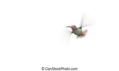 gekke , animatie, met, het zoemen, vogel