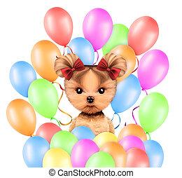 gekke , dier, omringde, door, ballloons