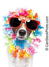 gekke , dog, hawaiian, lei, en, zonnebrillen