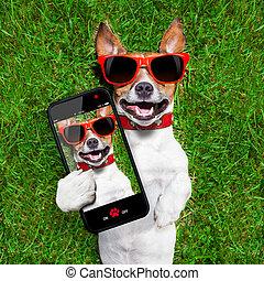 gekke , selfie, dog
