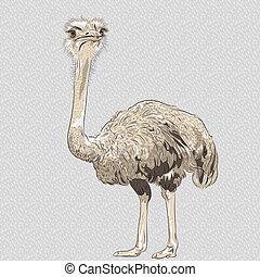gekke , struisvogel, vector, closeup, verticaal, vogel