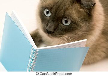 gekke , wat, kat, she`s, lezende , verbaasd