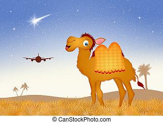 gekke , woestijn, kameel