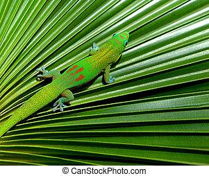 gekko, het verbergen