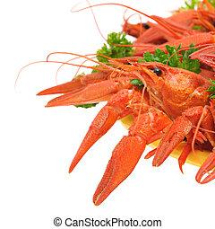 gekocht, crayfish, mit, petersilie