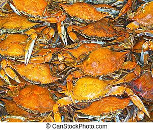 gekocht, maryland, callinectes, blaues, krabben, sapidus