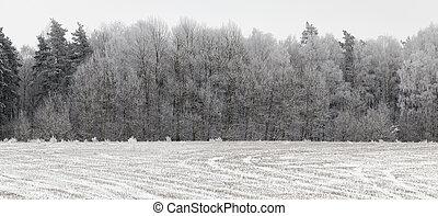 gelée, arbres