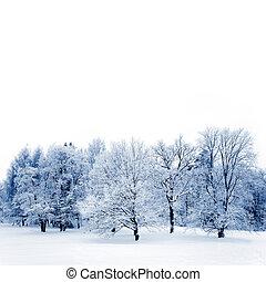 gelado, árvores