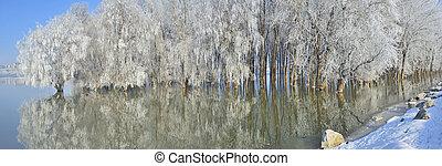 gelado, árvores inverno